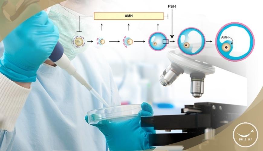 พยากรณ์ปริมาณไข่ในรังไข่ ได้ด้วยการตรวจ AMH